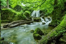 Treesforest